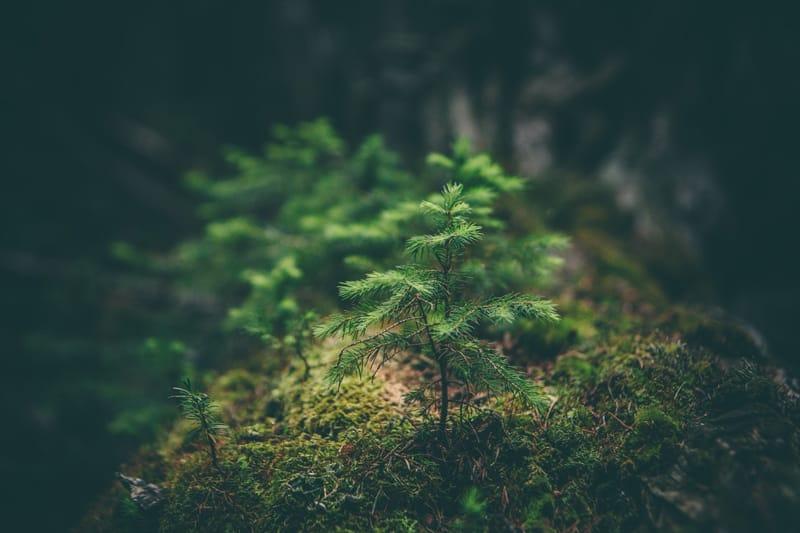 umweltschutz-unternehmen-kenkel